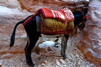 His Doggy Friend Feeling Safe City of Petra Jordan